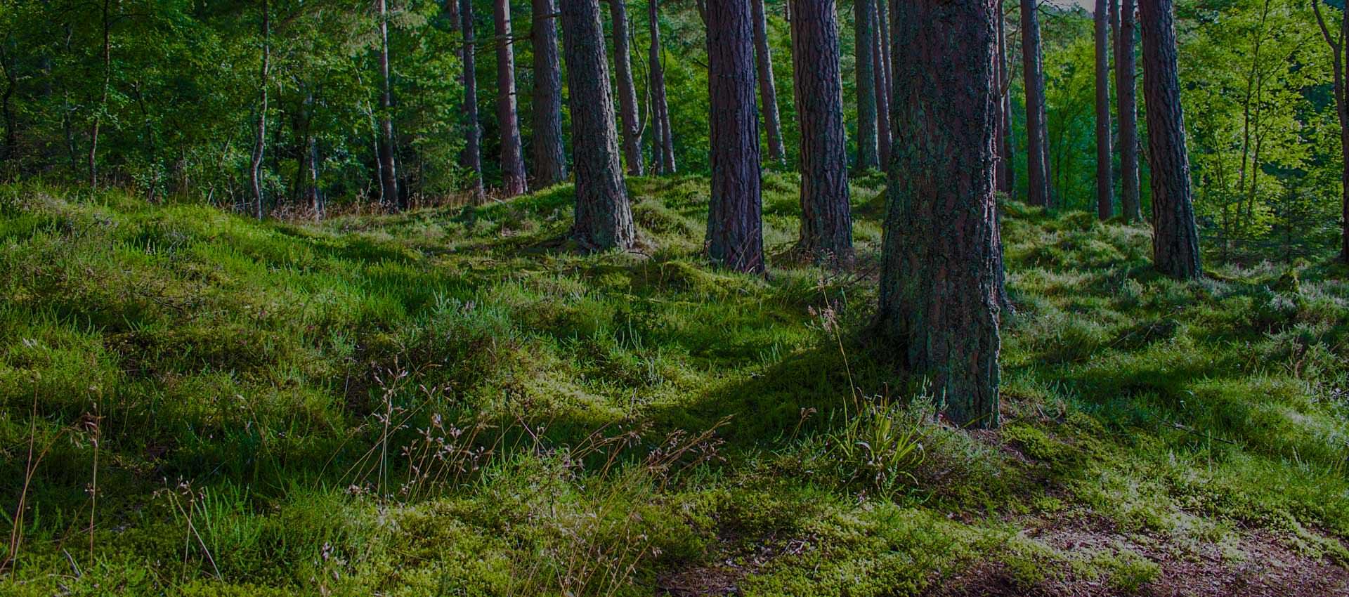 Insperium Forest