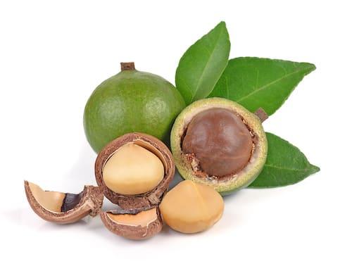 Macadamia hnetur